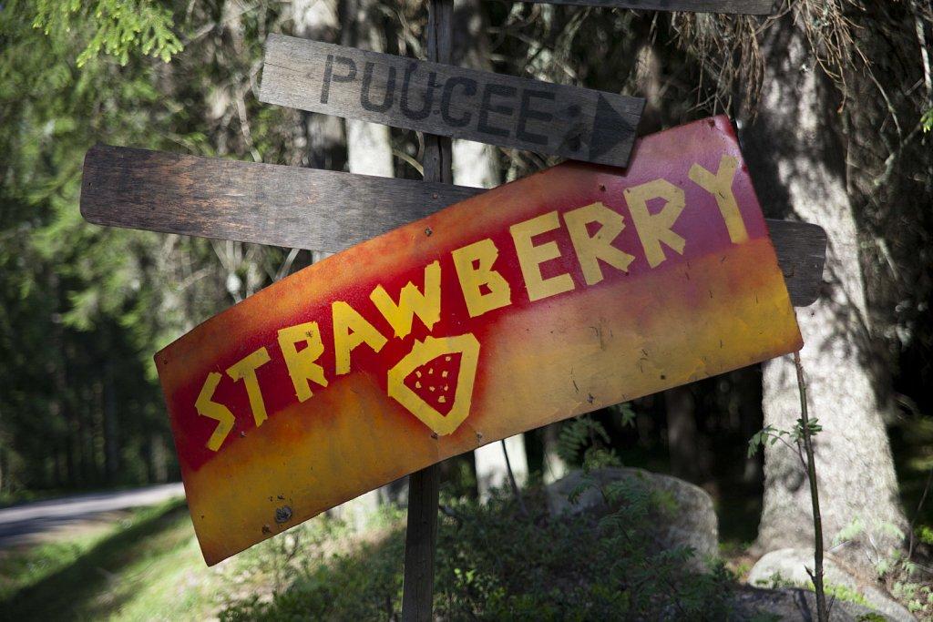 Strawberry Hills 26.5